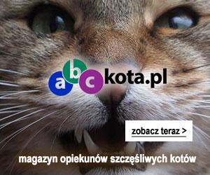 Serwis o kotach